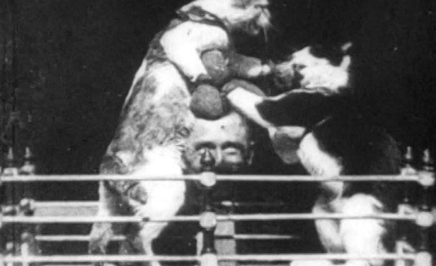 """A világ első """"cicás videóján"""" bokszoltak a házikedvencek"""